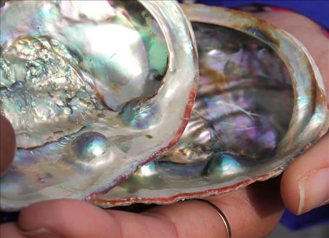 Las perlas en el saco perlífero