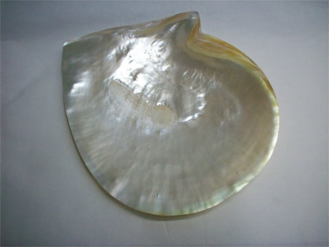 La madre perla de una concha