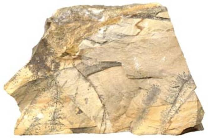 Trozo de piedra caliza compacta